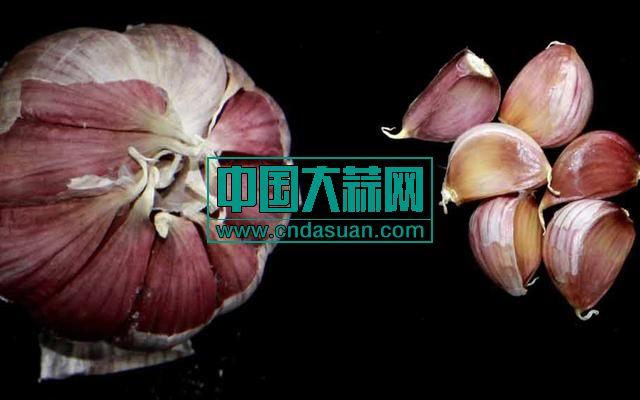 二水早紫皮蒜。中国农业科学院供图