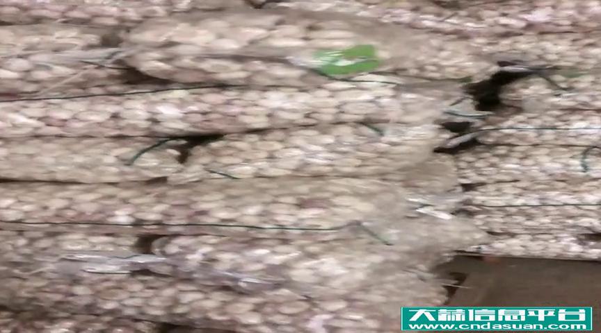邳州若勇蒜业8.6日大蒜主流收购价